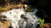 golan : Greek stream in National reserve, Nahal Hermon. Sanctuary of Banias Israel