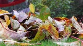 Footage of apple leaves being collected with a rake towards the camera until the frame is covered by blurred leaves filmed at low angle in autumn Vídeos