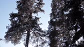 januari : Winter trees against the winter sky. Nature in winter Stockvideo