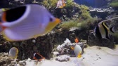 mergulho : Beautiful fish in clear aquarium water. A colorful aquarium filled with stones, branches, algae and an air pump that provides fish with oxygen bubbles