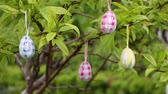 holiday : Tree decorated with easter eggs Stock Footage