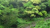 jeju island : wooden bridge and thick forest at the entrance of Eongtto waterfall in Jeju island, Korea. Stock Footage