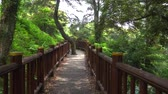 fazer : Wooden trail at the side of Soesokkak in Jeju. Soesokkak is a attraction famous for its beautiful terrain formed by stream and seawater erosion in rocks made of lava flow. Stock Footage