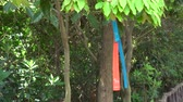 Jeju, Korea - May 25, 2017: Olle trails way-marker ribbon tied on a branch, swaying in the breeze. Jeju Olle is a foot path on Jeju island, consists of 21 connected numbered routes.