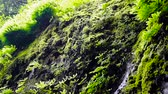 musgo : Water dripping down a green plant covered stone wall in a rain forest in Oregon