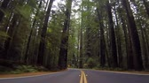 Passing through gigantic Redwood trees in Humboldt Redwoods State Park in California Stock Footage