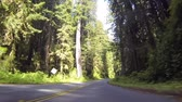 Driving through Redwood National Park in California