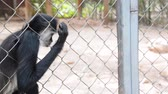macaco : Tourist feeding a spider monkey in captivity in Mexico