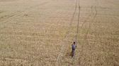 Aerial tracking shot of a long-haired man riding a bicycle in the centre of a wheat field during the day. Wideo
