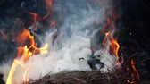 fourneau : Close up bonfire flames of camping fire, slow motion of burning wood and smoke in the grill. cooking a delicious lunch or dinner in a pot over an open fire in a hike in nature