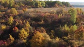 сентябрь : Drone view of autumn field and forest illuminated with sunset light. Multicolor tree leaves in autumn forest. Dirt road on a hill.