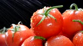 empilhados : While in the produce section, a grocer sprays cool water over vibrant tomatoes to keep them fresh