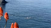 antreman : A group of athletes swimming across the cool ocean water during a sunny, warm day