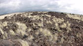 vegetação : As years of dried lava rests untouched, grass has taken root and made it way up through the porous, hardened earth. Vídeos