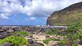 vibrante : A rocky shoreline in Hawaii highlights the lush nature of the islands driven in part by plentiful rainfall.