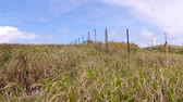 горизонтальный : A grassy field in the highlands of Molakai Hawaii with a beautiful blue sky