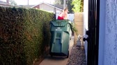 opětovné použití : A man rolls his green trash can down a side yard walkway the sidewalk for city trash pick up day.
