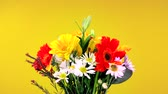 vibrante : A beautiful bouquet of flowers consisting of daisies and pansies rotating against a yellow background Stock Footage