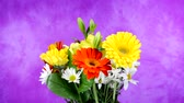 fundo colorido : A beautiful bouquet of flowers consisting of daisies and pansies rotating against a purple background