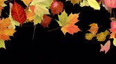 alpha matte : Multi colored leaves fall across a black background or alpha matte to depict the beautiful foliage that forms in the fall. Can be placed over another background of your choice.