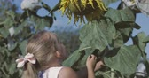 slunečnice : Cute child with sunflower in summer field. 4k video shooting by handheld gimbal