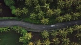 транспорт : Above aerial view of rural road in deep rain forest with green tree by drone. Car riding between palm plantations