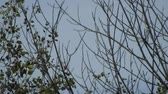delgado : Branches And Leaves Swaying Slightly In Distance With Blue Sky Stock Footage