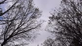 milharal : 4K Autumn Winter Trees Swaying And White Puffy Clouds Close Up 003 Vídeos