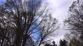ladrão : 4K Autumn Winter Trees Swaying And White Puffy Clouds Stock Footage