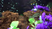 ornamentale : 4K Fish Swimming In Aquarium Fiori viola Brown Reef foglie verdi