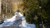 kasım : 4K Winter Pathway With Trees Swaying In The Wind 2 Stok Video