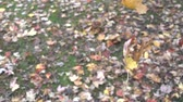kasım : Slow Motion Autumn Leaves Falling Onto Ground 004