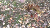 kasım : Slow Motion Autumn Leaves Falling Onto Ground 005