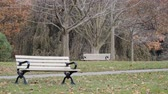 coniferous trees : 4K Overcast Day Autumn Tree Branches Swaying In Wind By Two Park Benches Stock Footage