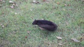 nozes : Slow Motion Black Squirrel Turning Around Then Jumping Leaping