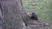 nozes : Slow Motion Squirrel Gesturing To Come Towards Him With Hand Stock Footage