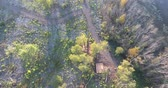 ormanlar : Flying Over Walking Trail Path In Forest Then Revealing A School Bus