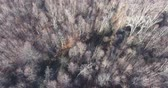 Flying Over Bare Forest Canopy In Winter With No Snow