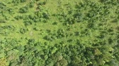bare forest : New Baby Forest Tree Saplings Aerial View 2 Stock Footage