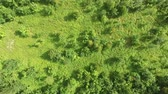 kasım : New Baby Forest Tree Saplings Aerial View Stok Video