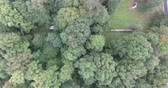 Truck And Trailer In Forest Aerial Drone Fly Over