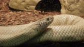 snake skin : California King Snake Behind Glass