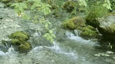 river : Gentle flowing ice cold river stream flows over moss covered stones and rocks