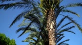 wood : palm trees and citrus trees