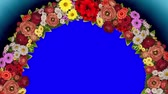růže : Animation of a rotating ring of flowers on a blue background. The chroma key. Loop video