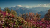вид : Colorful autumn morning in the Caucasus mountains. Upper Svaneti, Georgia, Europe. HD video (High Definition). Exported from RAW file. Стоковые видеозаписи