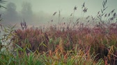 cana : Colorful autumn morning on the foggy pond. HD video (High Definition). Exported from RAW file.