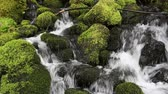 beauty in nature : Small creek cascading over green rocks.