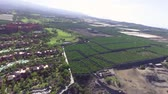 jedzenie : Tenerife. Aerial view of countryside with banana cultivation