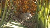 turtledove : turtledoves
